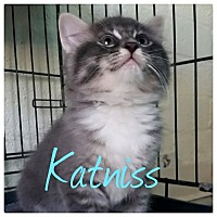 Adopt A Pet :: Katniss - Scottsdale, AZ