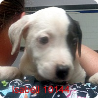 Adopt A Pet :: Isabell - Greencastle, NC