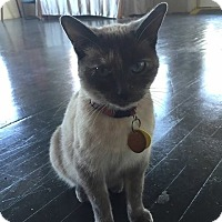 Adopt A Pet :: Dingo Hood - McDonough, GA