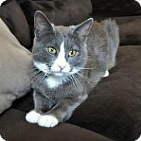 Adopt A Pet :: Silvie - Mission Viejo, CA