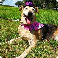 Adopt A Pet :: Isabel - Simsbury, CT