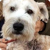 Adopt A Pet :: UTAH (video) - Los Angeles, CA