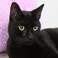 Adopt A Pet :: Tippy - Sarasota, FL