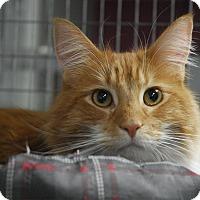 Adopt A Pet :: Bentley - Winchendon, MA