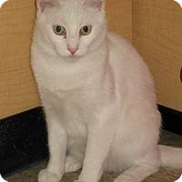 Adopt A Pet :: Princess - Barrington Hills, IL