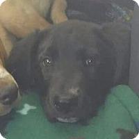 Adopt A Pet :: Chuck - Glen St Mary, FL