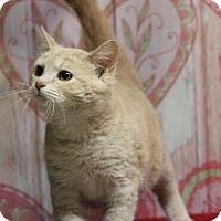 Adopt A Pet :: Samara - Washington, DC