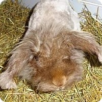 Adopt A Pet :: Robbie - Woburn, MA