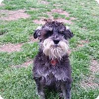 Adopt A Pet :: Jetta - Broken Arrow, OK