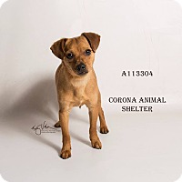 Adopt A Pet :: GOYO - Corona, CA