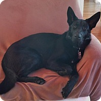 Adopt A Pet :: Iris - Rigaud, QC