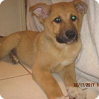 Adopt A Pet :: LUCAS - La Mesa, CA