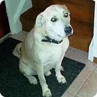 Adopt A Pet :: Comet - Blackstock, ON