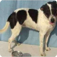 Adopt A Pet :: Tammy - Orlando, FL