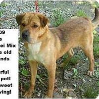 Adopt A Pet :: # 248-09 @ Animal Shelter - Zanesville, OH