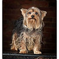Adopt A Pet :: Slinkie - Owensboro, KY
