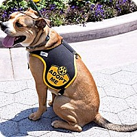 Adopt A Pet :: Turbo - Santa Monica, CA