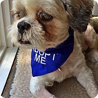 Adopt A Pet :: Harvey - Toronto, ON