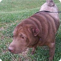 Adopt A Pet :: Jasmine in FL - Mira Loma, CA