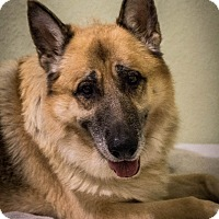 Adopt A Pet :: King (Halo) - Phoenix, AZ
