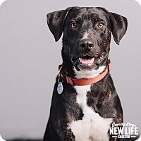 Adopt A Pet :: Hutch - Portland, OR