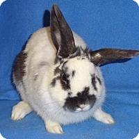 Adopt A Pet :: Lenny - Woburn, MA
