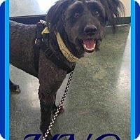 Adopt A Pet :: UNO - Halifax, NS