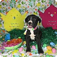 Adopt A Pet :: Sandy - Orange County, CA