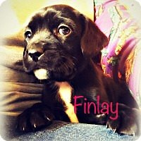 Adopt A Pet :: Finlay - Tijeras, NM