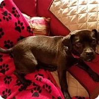 Adopt A Pet :: Chumley - Cincinnati, OH