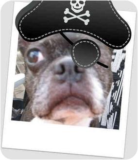 Boston Terrier Dog for adoption in Maple Park, Illinois - Baxter