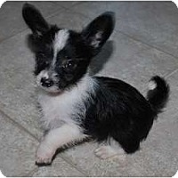Adopt A Pet :: Logan - Oceanside, CA