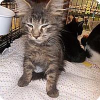 Adopt A Pet :: Jake - Riverside, RI