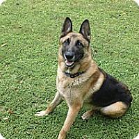 Adopt A Pet :: Gilligan - Green Cove Springs, FL