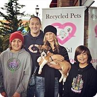 Adopt A Pet :: Brodie - Sacramento, CA