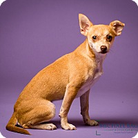 Adopt A Pet :: Boston - MEET ME - Norwalk, CT