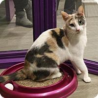 Adopt A Pet :: Catarina - Herndon, VA