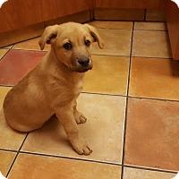 Adopt A Pet :: Tartan - Evergreen, CO