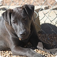 Adopt A Pet :: Beast - Mahwah, NJ