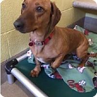 Adopt A Pet :: Redwood - Westminster, CO