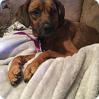 Adopt A Pet :: Buddy - Milwaukee, WI