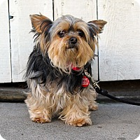 Adopt A Pet :: Ms. Pepper - Los Angeles, CA