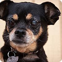 Adopt A Pet :: Nemo - Boise, ID