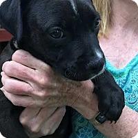 Adopt A Pet :: Karl - Thompson, PA