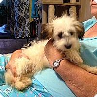 Adopt A Pet :: Curly Sue - Hazard, KY