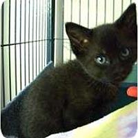 Adopt A Pet :: Cole - Shelton, WA