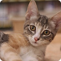 Adopt A Pet :: Ashley - Sacramento, CA