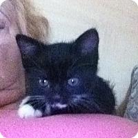 Adopt A Pet :: Bubi - Laguna Woods, CA