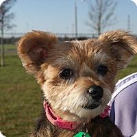 Adopt A Pet :: Emma Beatty - Urbana, OH