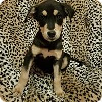 Adopt A Pet :: Fonzi - Stamford, CT